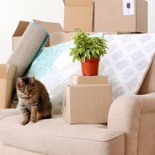 В кауие сроки необходимо оформить квартиру собственность